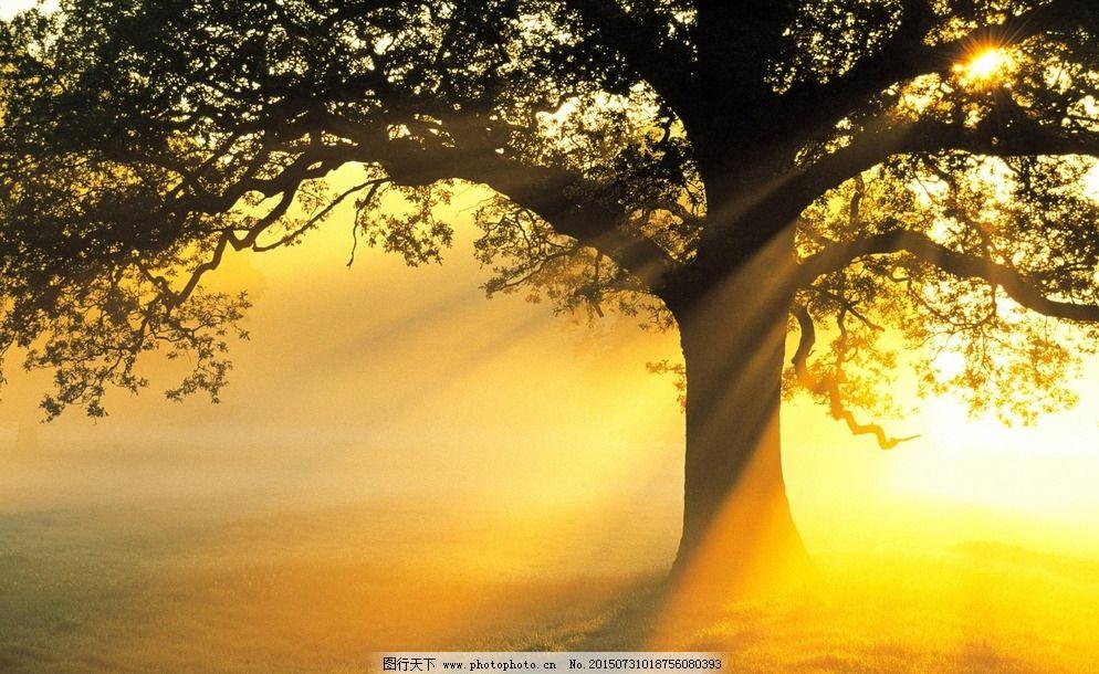 阳光照树林图片_可爱卡通