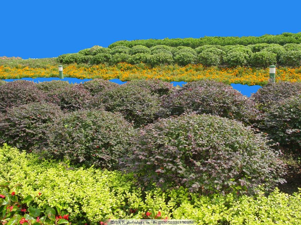 园林植物草坪