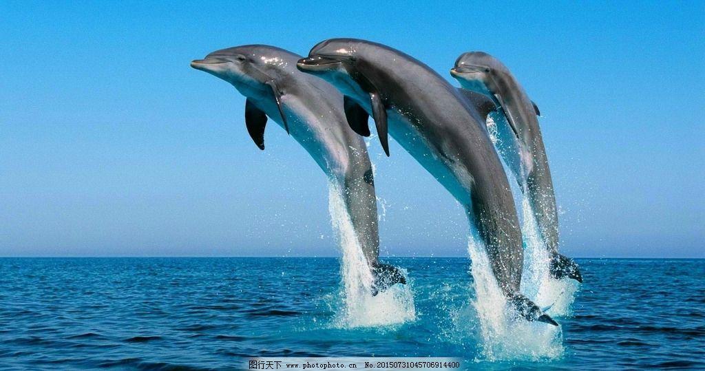 海豚背景 藍色 海報背景 生物世界 海洋生物