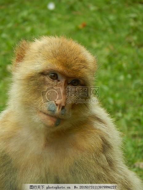 可爱呆萌的小猴子
