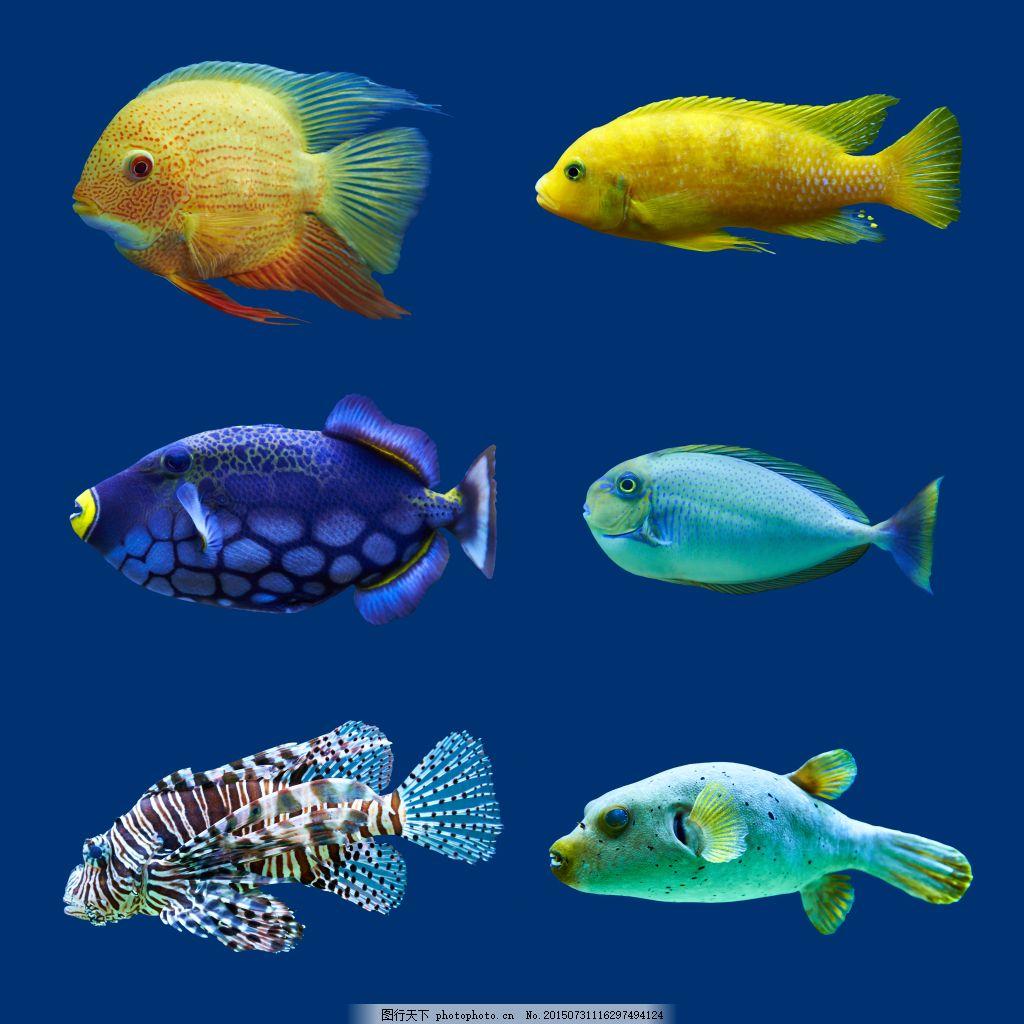 小鱼种类大全高清 热带鱼 彩色的海洋鱼类图片 彩色鱼 鱼儿 漂亮的鱼图片