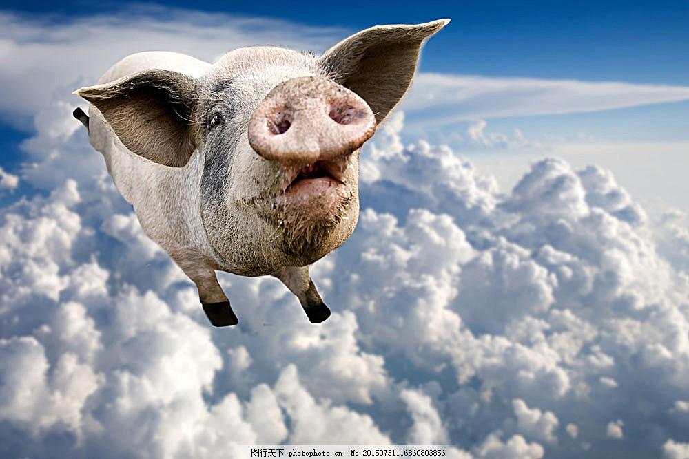 可爱小猪 可爱动物 小猪 飞翔的猪 动物世界 陆地动物 生物世界 图片