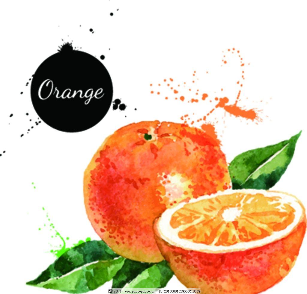 橙子 手绘 桔子 水果 矢量图图片