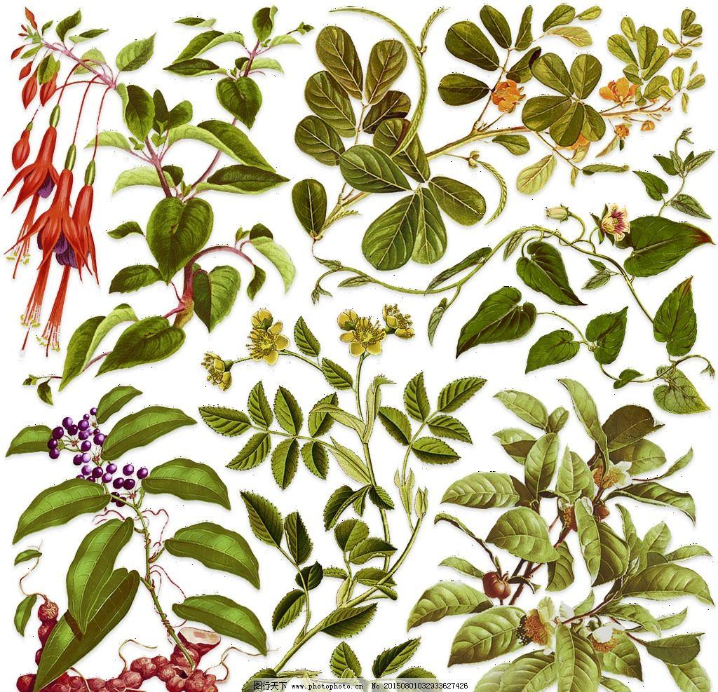 手绘 植物 绿色