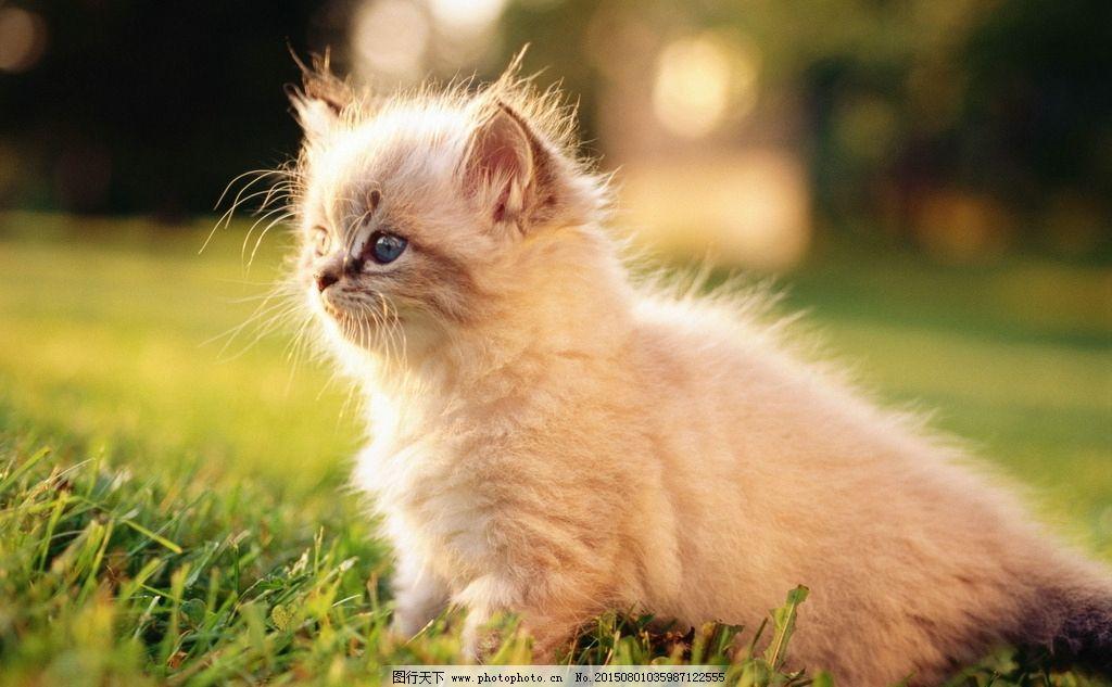 唯美 炫酷 可爱 小猫 猫咪 动物 宠物 宠物猫 摄影 生物世界 家禽家畜