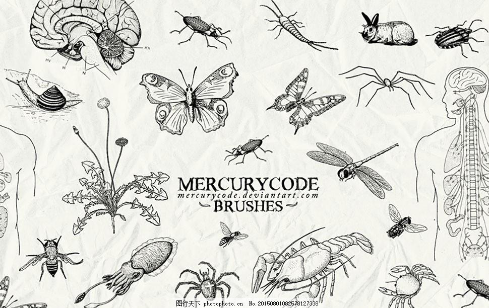 手绘昆虫和人体结构笔刷 黑白效果 蝴蝶 蜈蚣 蜘蛛 蜻蜓 龙虾