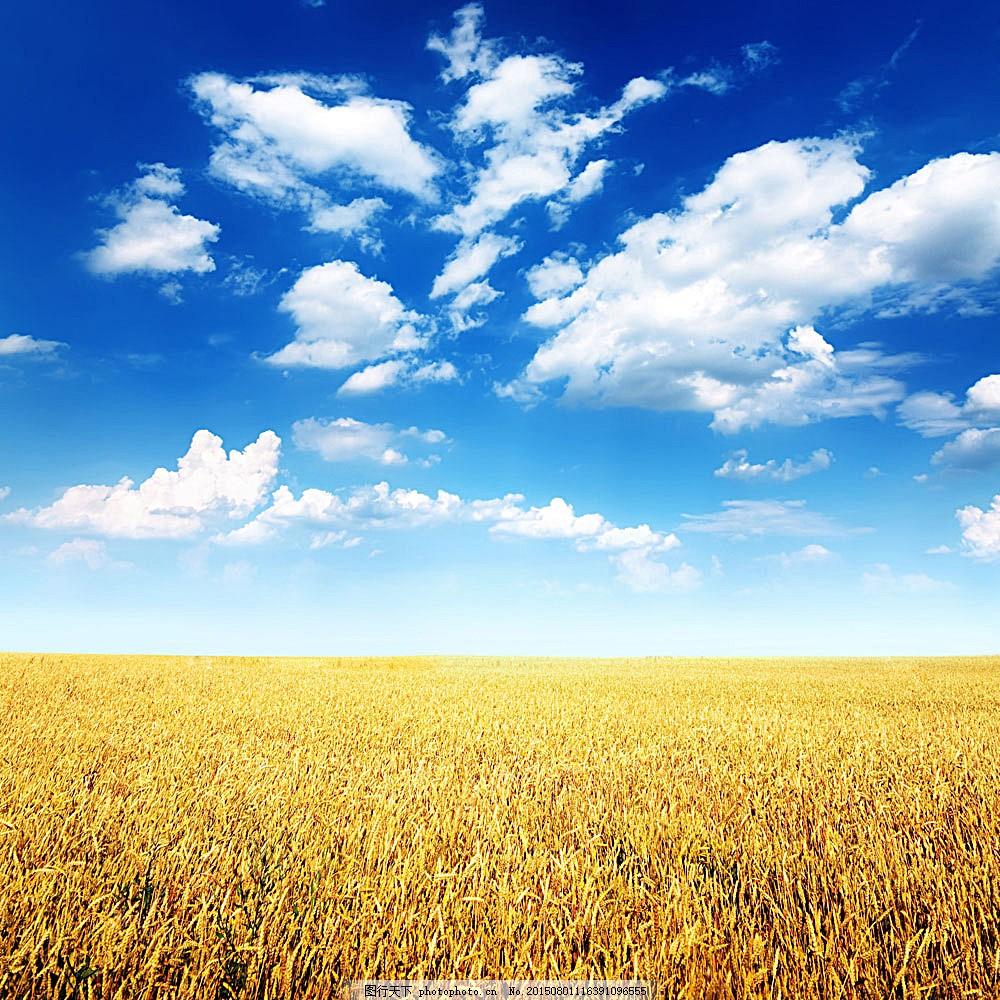 麦田 小麦 麦穗 麦子 秋天风景 田园风光 自然景观 图片素材