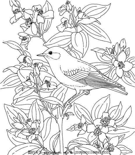 鸟类素描 动物素描
