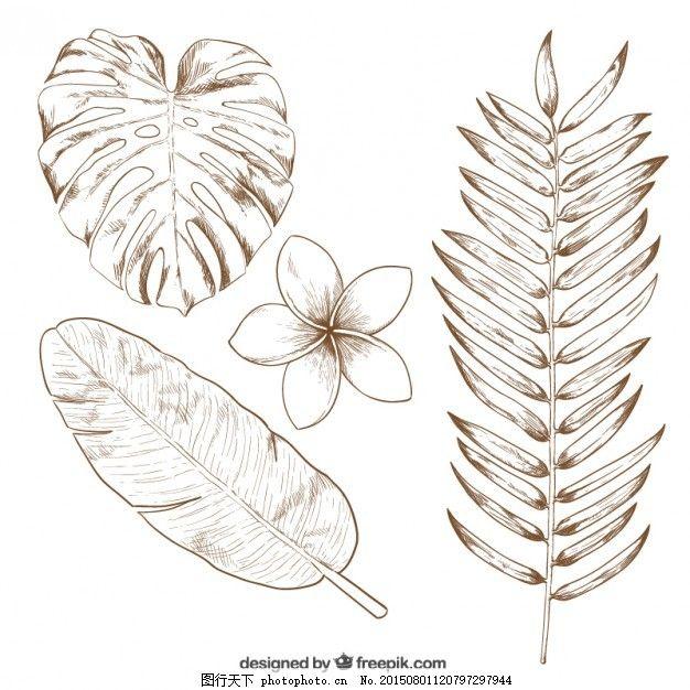 手绘热带树叶
