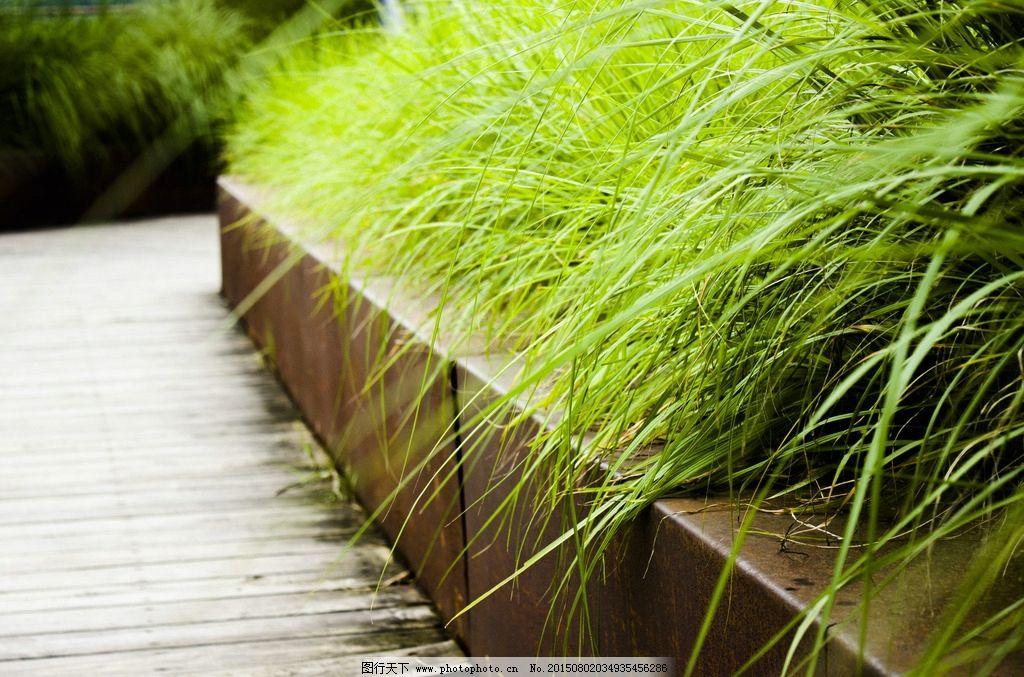 湿地公园 后滩 针茅 观赏草 园林植物  摄影 自然景观 其他 240dpi jp