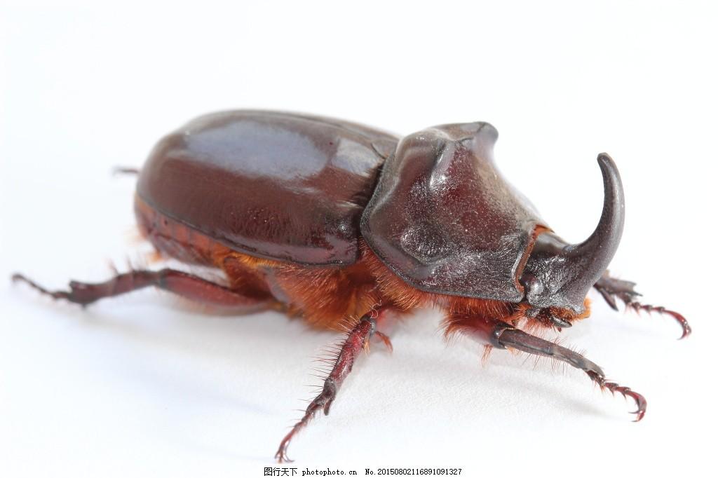 各种昆虫动物 昆虫世界 生物世界 千牛 甲壳虫 蚂蚱 蝗虫 害虫
