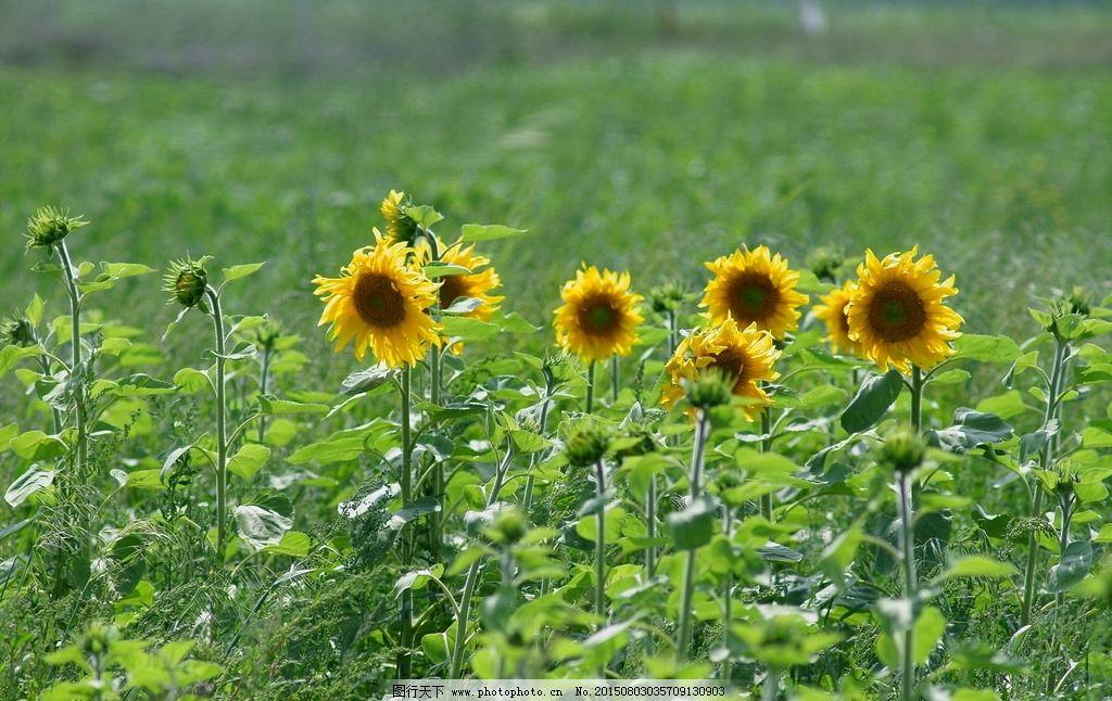 植物 花卉 花 自然 花草