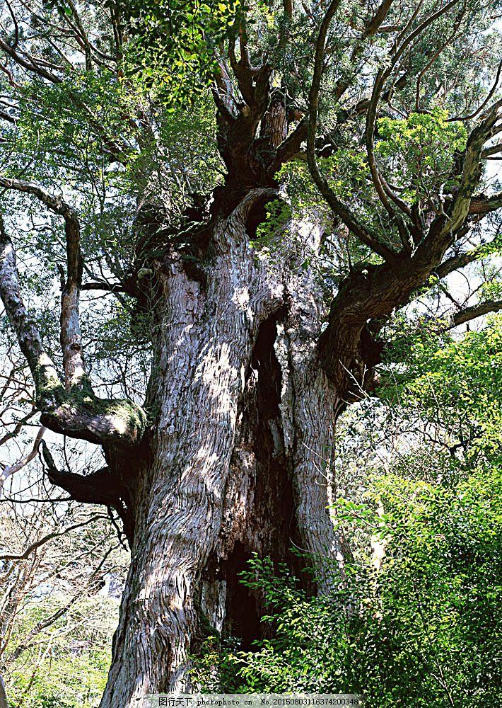 自然 风景 树根 树林 森林 大树 阳光 花草树木 生物世界 图片素材