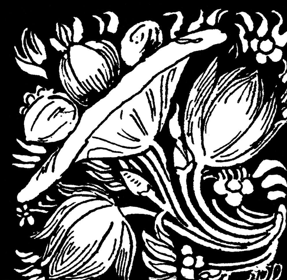 黑白花纹背景 黑白 图案 植物 手绘 复古 黑白图案 背景底纹 底纹边框