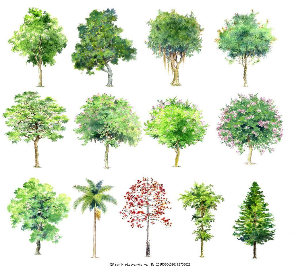 手绘树木素材 树木素材 手绘树木 psd素材 樱花 植物 手绘植物 园林