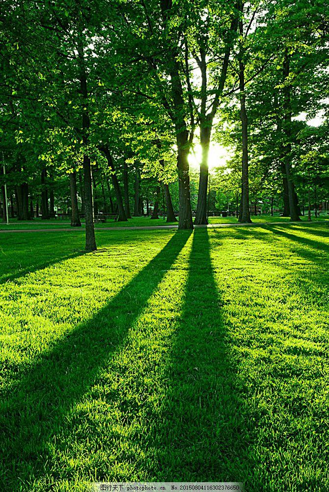 树林草地风景 树林草地风景图片素材下载 美丽树林风景 森林风景