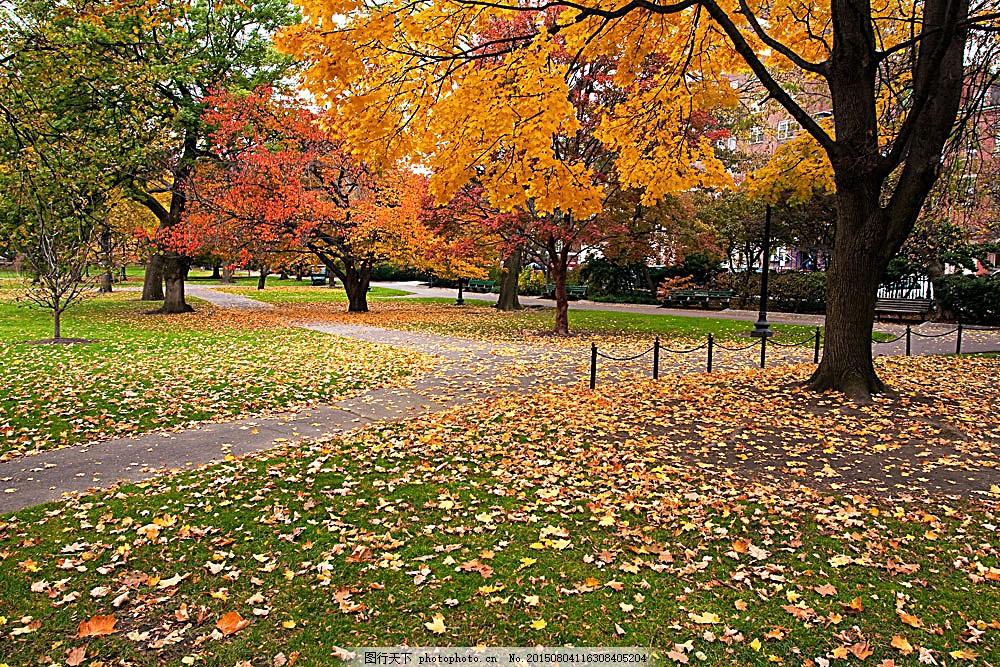 秋天公园风景 秋天树木风景 草地 落叶 黄叶 秋季美景 美丽景色