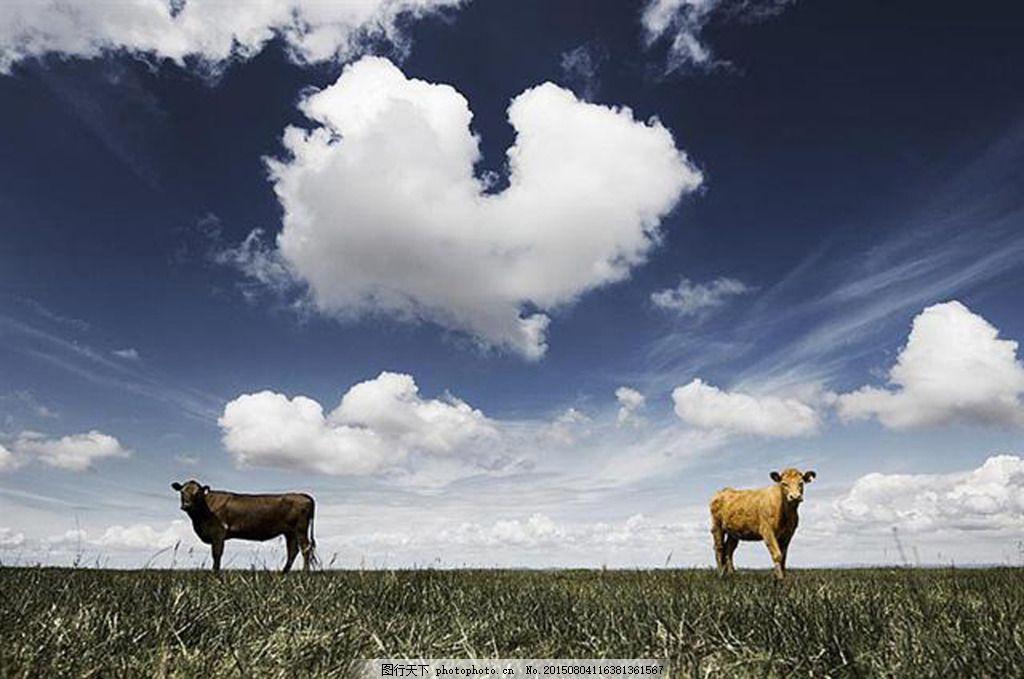 自然风景 天空 云彩 草原 动物 牛 心形 旅游 灰色