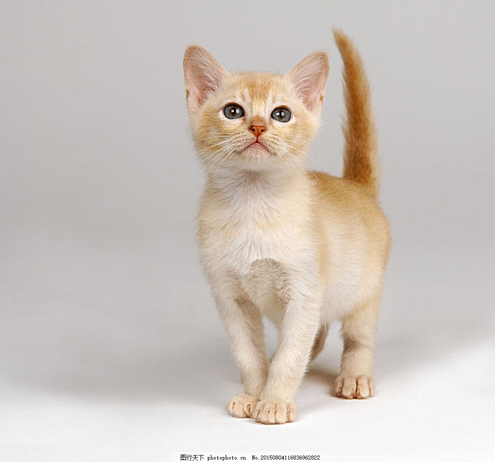 可爱小猫咪
