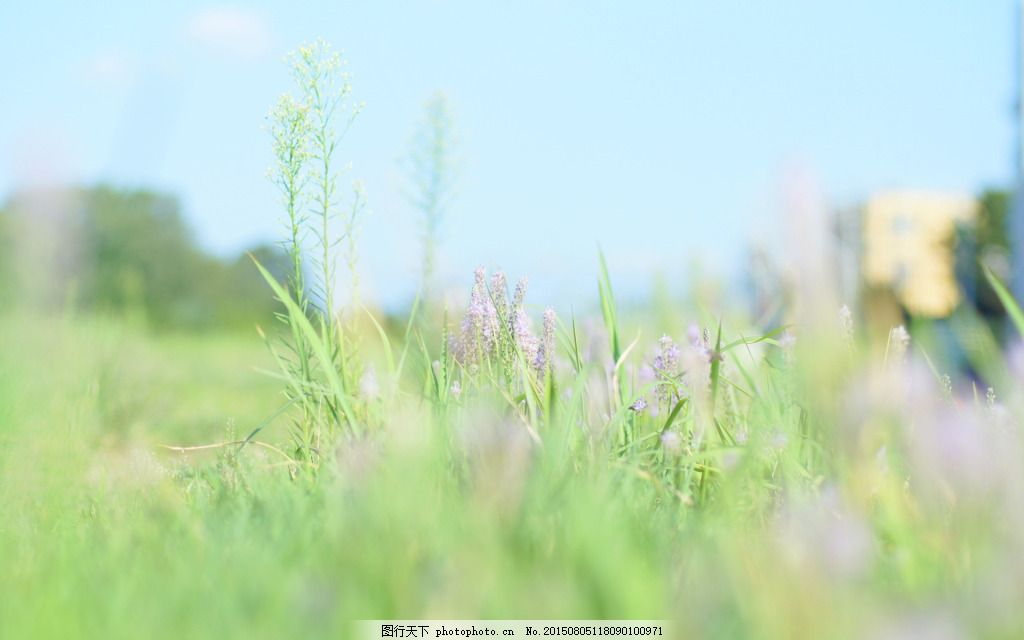 淘宝海报背景素材 绿色背景 小清新背景 唯美薰衣草