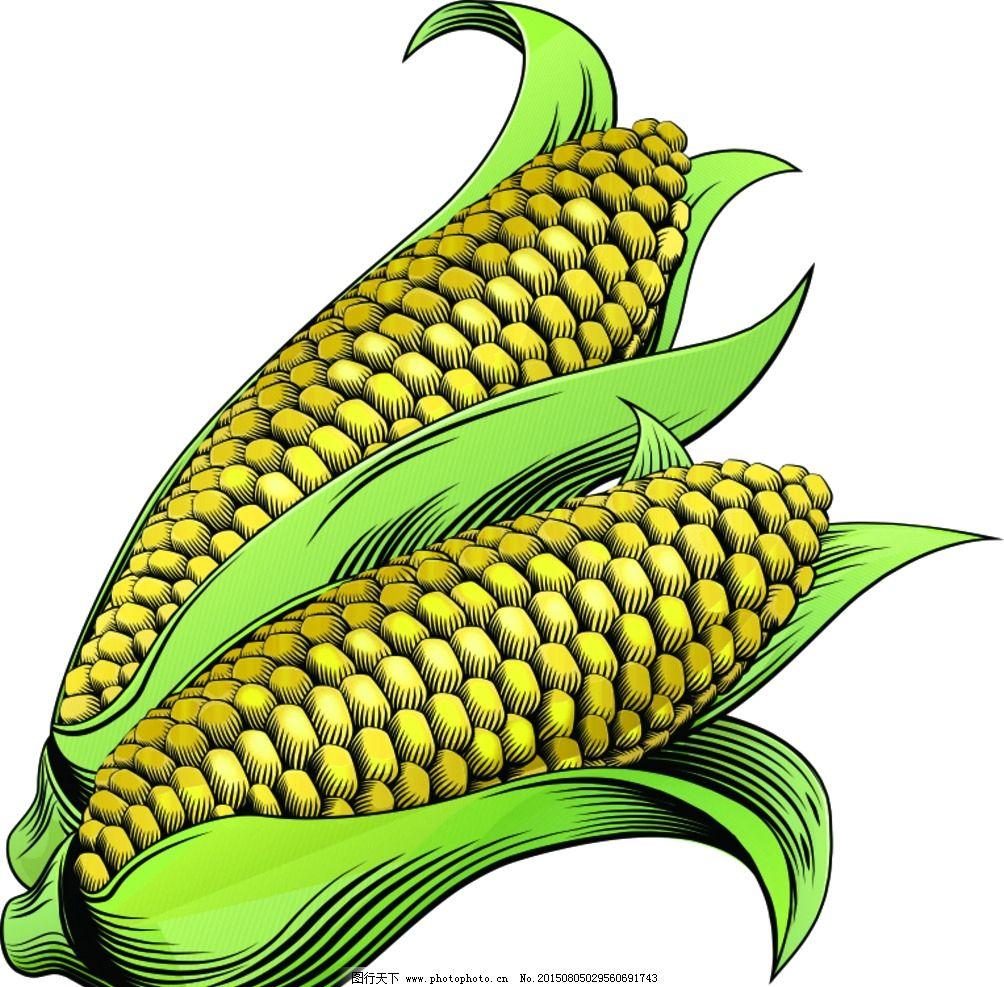 玉米 手绘 矢量图片