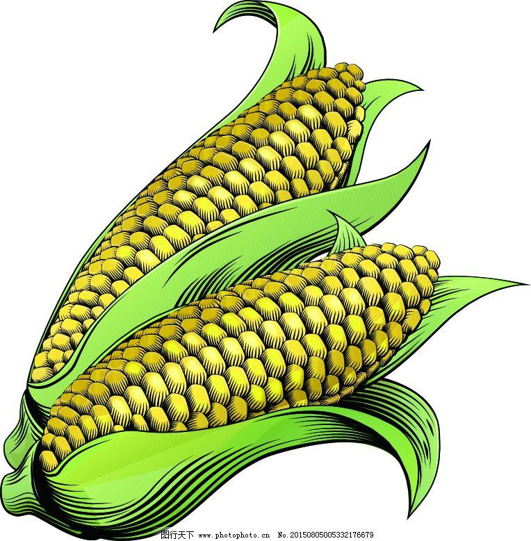 玉米手绘高清矢量苞谷