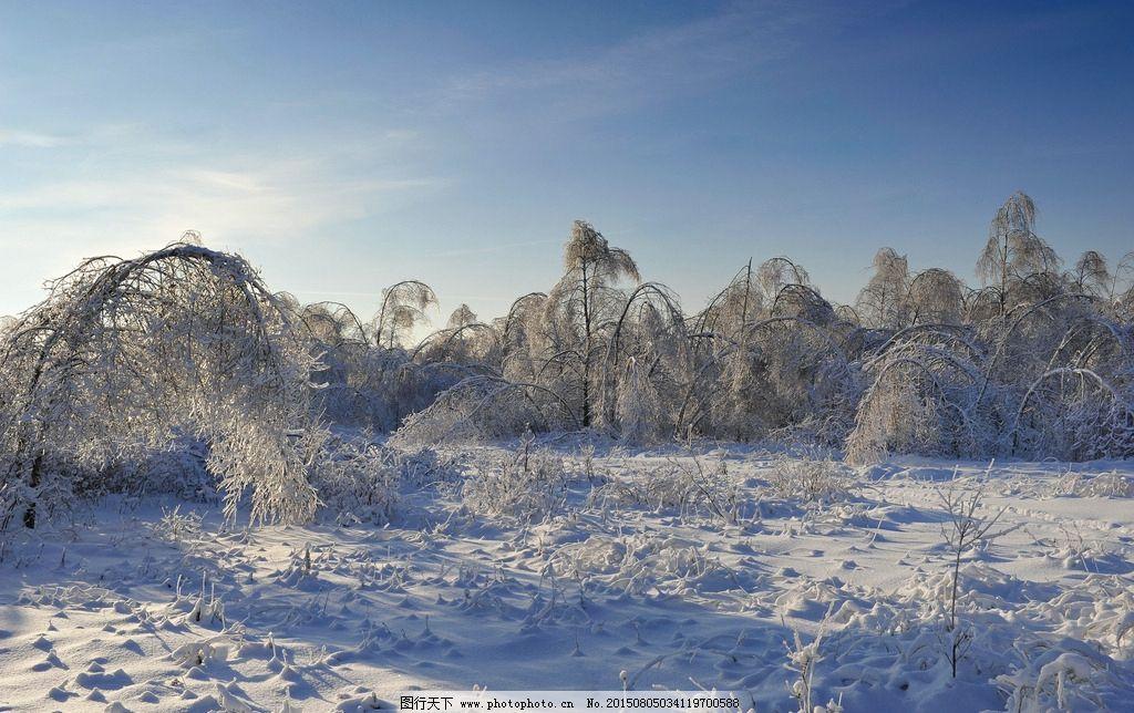 冬天 树干 树枝 松树 梧桐树 树林 森林 公园 冬季雪景 树木 雪地