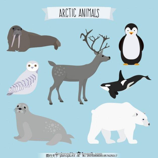 北极动物系列