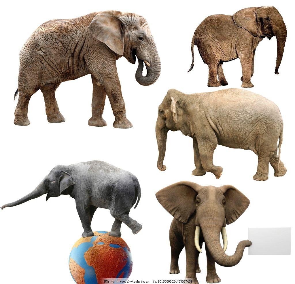 象 大象 大象摄影 野生大象 野生动物 非洲 非洲大象 动物 动物 设计
