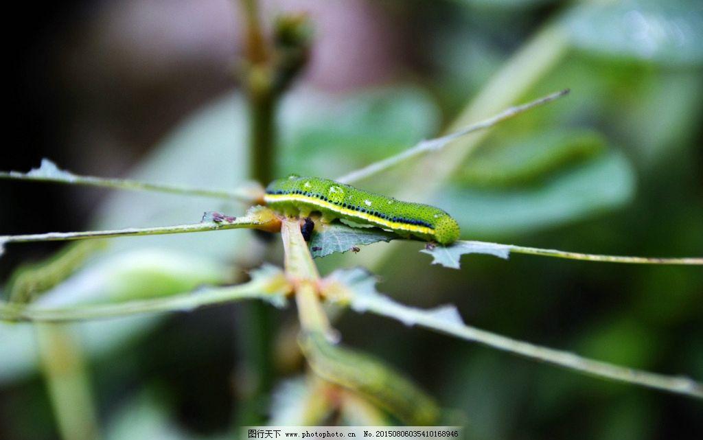 虫子吃树叶图片