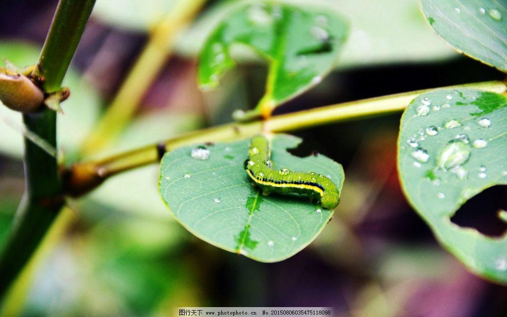 虫子树叶图片