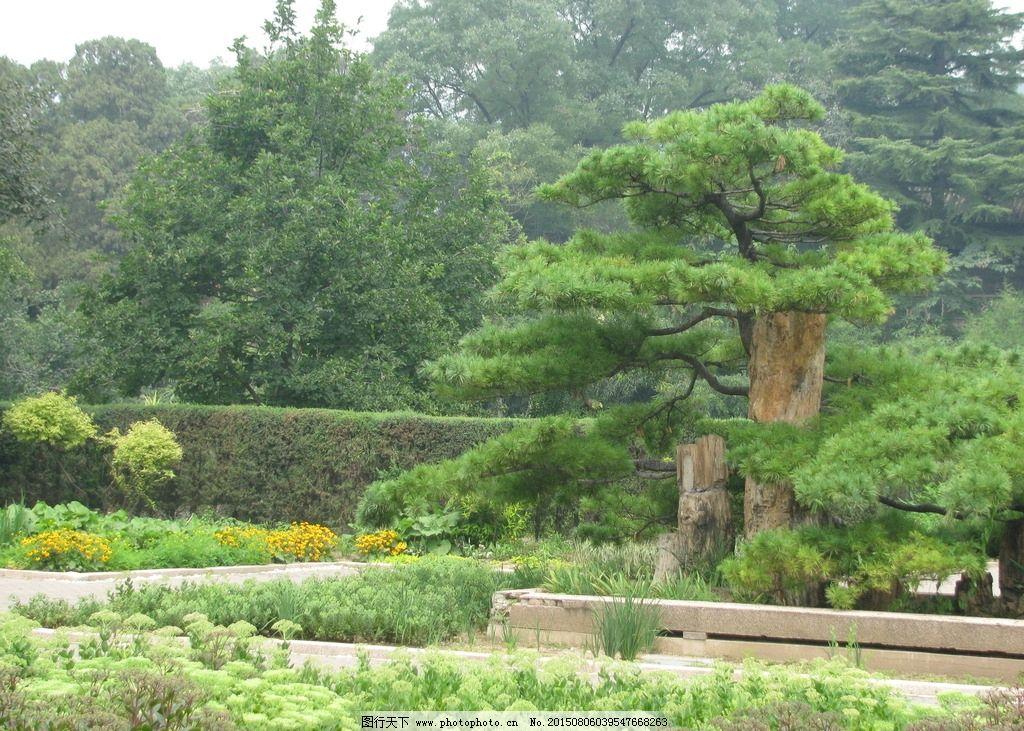绿化景观 园林绿化 松树 花坛 灌木丛 绿地 草地 花草 树木