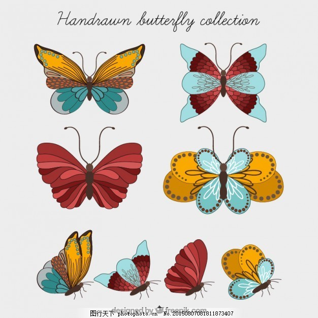 手绘蝴蝶收集 自然 动物 手画 飞 飞行 昆虫 白色