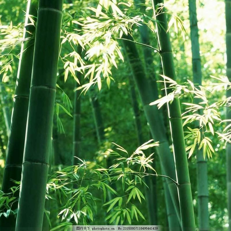 美丽的竹林图片
