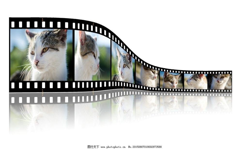 胶卷 胶片底片 胶卷带 相机胶卷 相机胶带 猫 小猫 宠物 喵星人