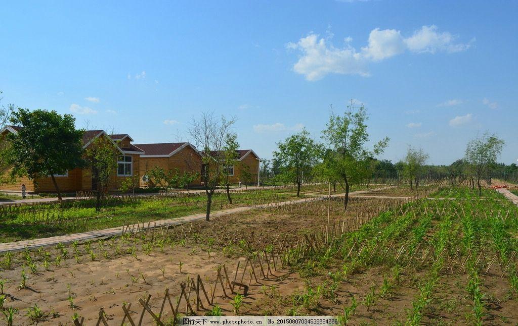 栅栏 果树 自然风光 庄园 幼苗 绿色菜园子 农场种菜 枣树 家庭农场图片