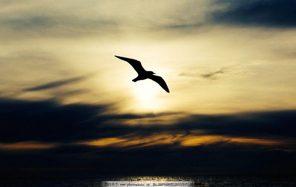 鹰 老鹰 飞翔的老鹰 天空 日出 日落 夕阳 动物 摄影