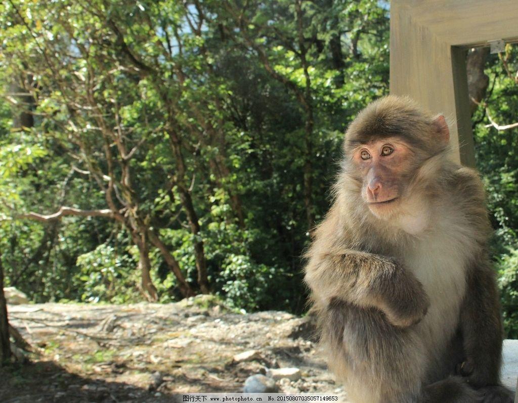 猴子 野猴 野生动物 山猴 小猴 泼猴 摄影 生物世界 野生动物 72dpi j