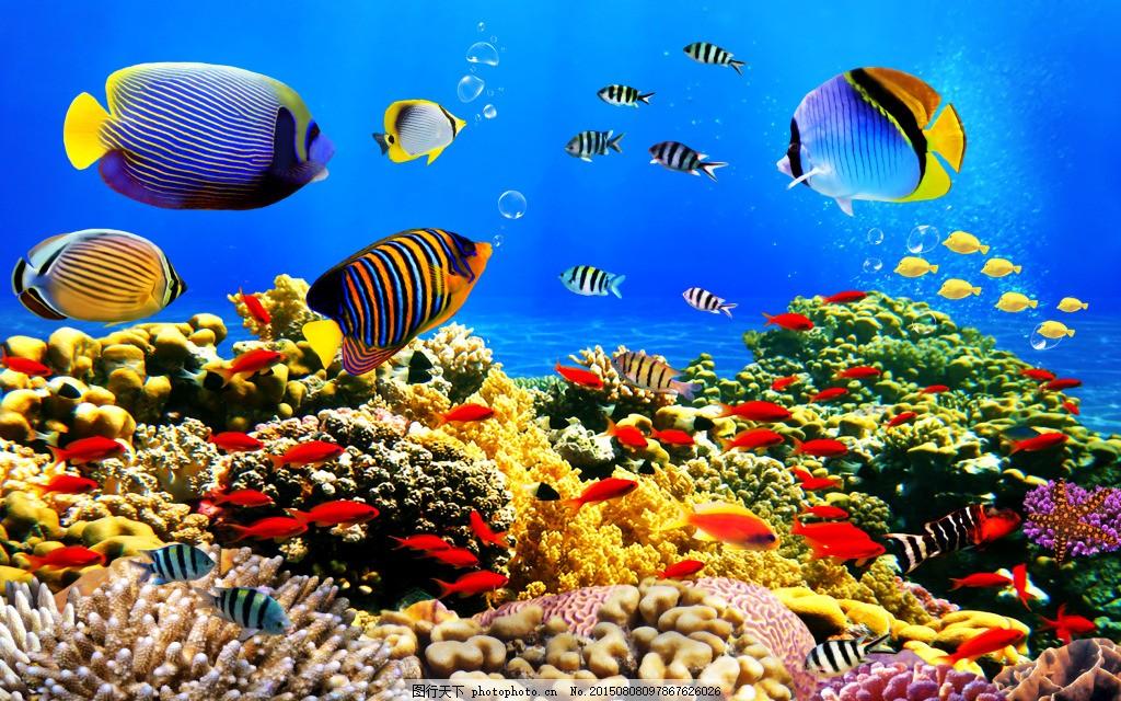 美丽的热带鱼 海底世界 珊瑚 蓝色图片