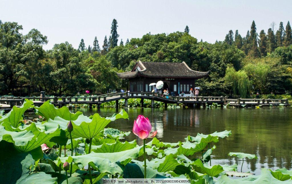 曲院风荷 杭州 西湖 园林 山水 旅游风光 摄影 国内旅游