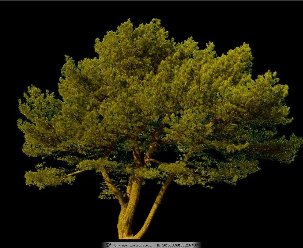 景观设计 设计 松树 园林