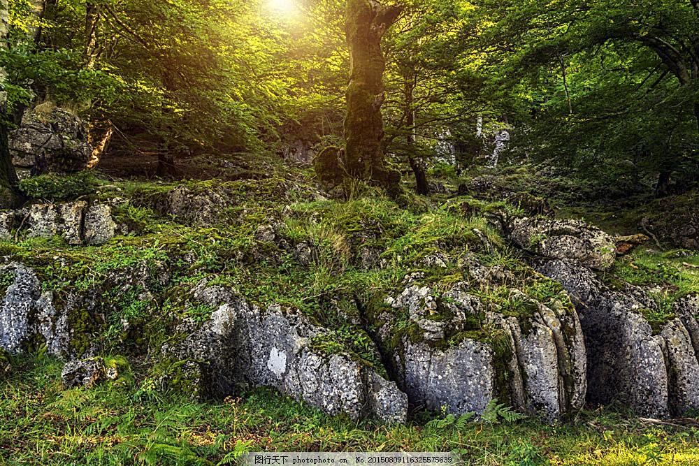 美丽的森林风景