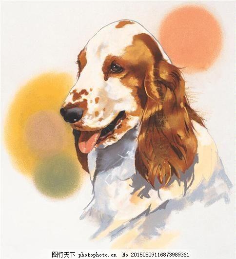 狗 家禽家畜 动物插图_11 设计素材 书画美术 白色