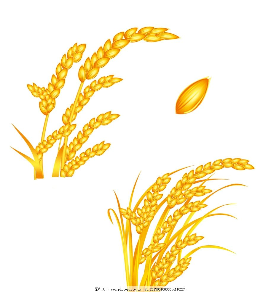 稻子 米 禾苗 白米 黄金稻谷 大米 稻杆子 设计 psd分层素材 psd分层