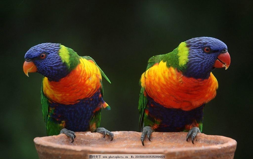 壁纸 动物 鸟 鹦鹉 1024_646