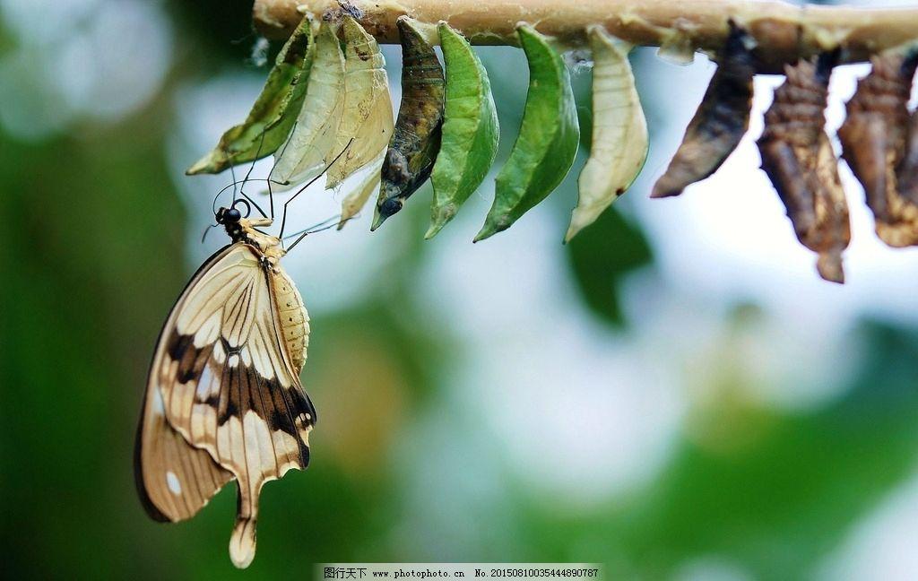 蝴蝶摄影 蝴蝶摄影图 蝴蝶照片 蝴蝶图 蝴蝶待定 蝴蝶写真 昆虫 动物