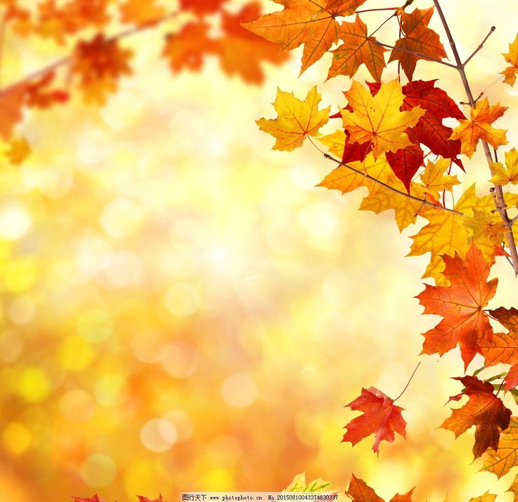 唯美 炫酷 自然 植物 树叶 叶子 黄叶 秋天 背景 设计 底纹边框 背景