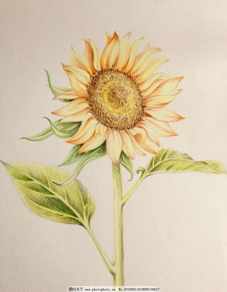 绘画 彩色铅笔画