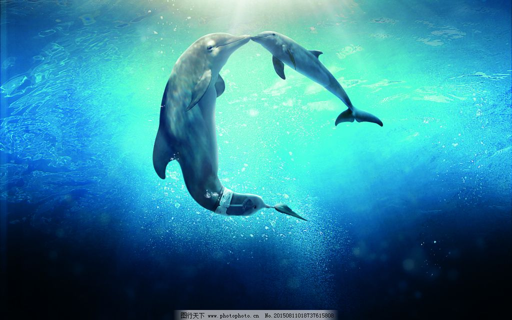壁纸 动物 海洋动物 桌面 1024_640