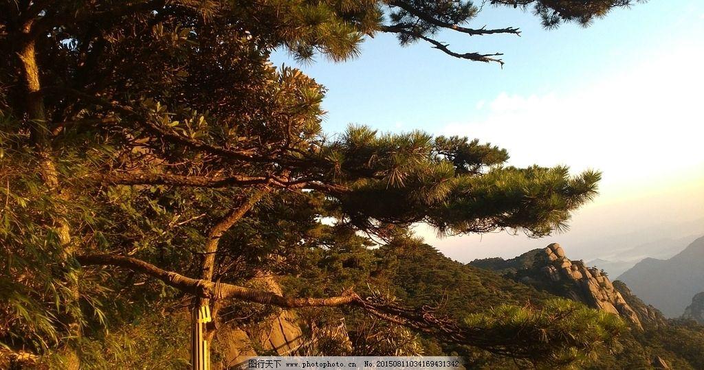 山顶上的松树图片